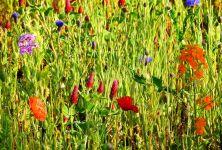 Darujete květinu? Pozor na alergie!